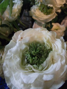 Rose 'Green Eye'