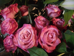 Rose 'Oxygen'