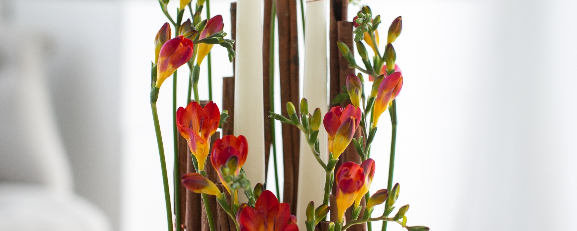 Fusion Flowers Fabulous Freesia